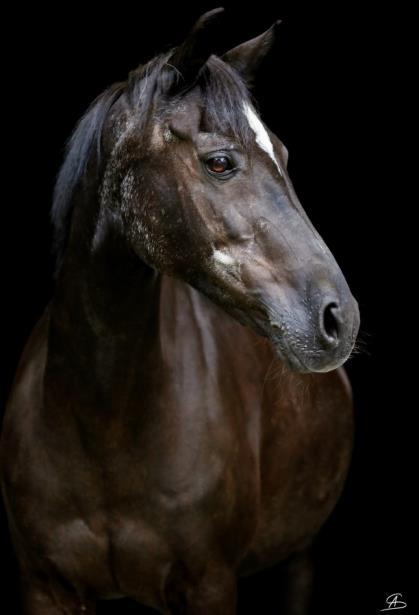 Einladung - Das alte Pferd - Gesund altern